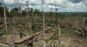nạn phá rừng